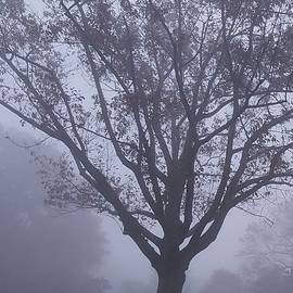 Tall Tree In Fog by Fang Norwood