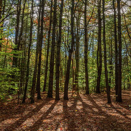 Tall Trees by Ralph Staples