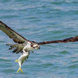 Talons Hold by RD Allen