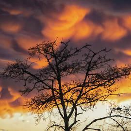 Tan Oak Sunset by Mitch Shindelbower