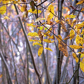 Tangled Willow Thicket by Mary Lee Dereske