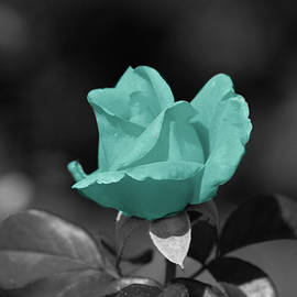 Teal rose by Dawn White