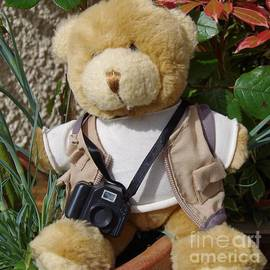 Teddy Photographer by Lesley Evered