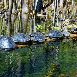 Ten Turtles On Log by Sally Weigand