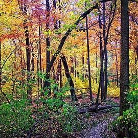 UW Arboretum Fall 2, Madison, Wisconsin by Steven Ralser
