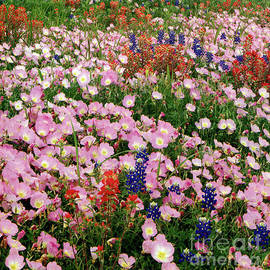 Texas Variety of Wildflowers by Ruth Housley