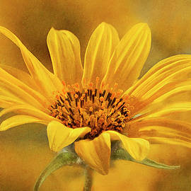 Textured Wild Sunflower Macro by John Rogers