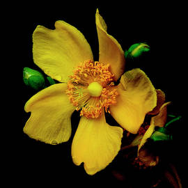 Textured Yellow Flower by Denise Harty