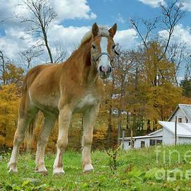 The Amish Sentinel  by Janice Pariza