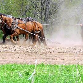 The Amish Way by Kay Novy