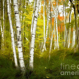 The Aspen Grove by Mike Nellums