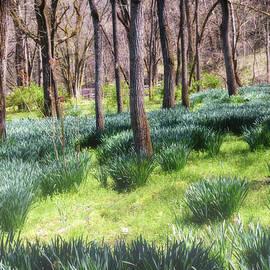 The Awakening Of Spring by Jim Love