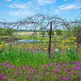 The Beauty of a Country Spring by Lynn Bauer