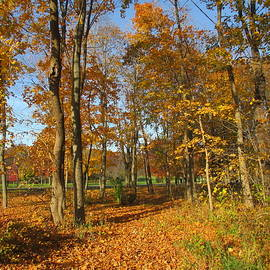 The Beauty Of Autumn by Kay Novy