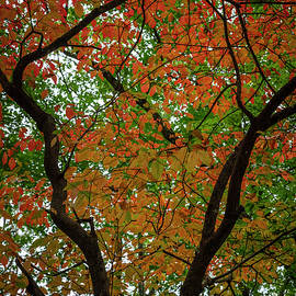The Beauty of Autumn Leaves by Debra and Dave Vanderlaan