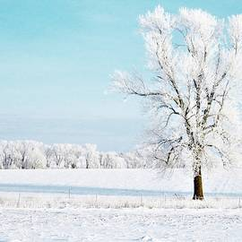 The Beauty of Winter by Lori Frisch