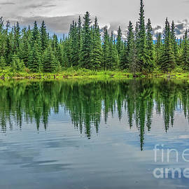 The Beaver Pond by Robert Bales