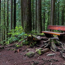 The Bench at the Forest Trail  by Alex Lyubar