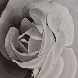The Black and White Rose