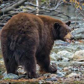 The Black Bear by Mitch Shindelbower