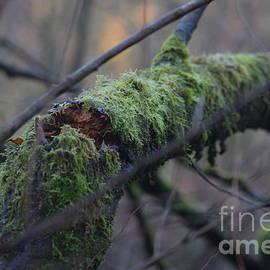 The Broking Branch