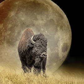 The Buffalo and the Moon by Jennie Marie Schell