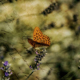 The butterfly 11 poet by Rita Di Lalla