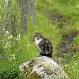 The Cat the Boss by Jouko Lehto