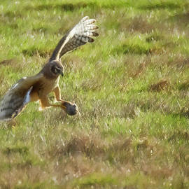 The Catch painterly by Belinda Greb