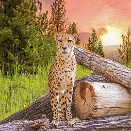 The cheetah sits on a dry wood in the forest. by Pritpal Momi