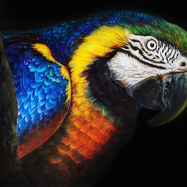 The Colorful Parrot Portrait by Asp Arts