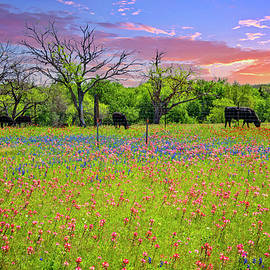 The Colors of Life on the Farm by Lynn Bauer