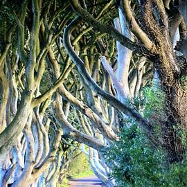 The Dark Hedges  by Neil R Finlay