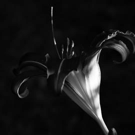 The Dark Side of Lily by Linda MacFarland