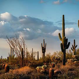 The Desert After The Rain  by Saija Lehtonen