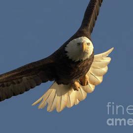 The Eagle Eye by Douglas Stucky