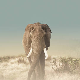 The Elephant's Path by Melanie Delamare