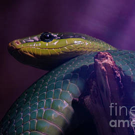 The Eye Of A Serpent by Linda Howes