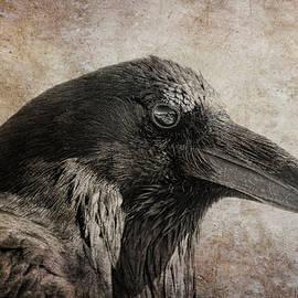 The Raven's Eye  by Jennie Marie Schell