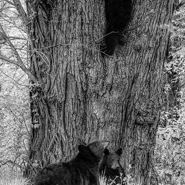 The Family Tree, Black and White by Marcy Wielfaert