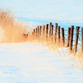 The Fence Row  by Lori Frisch