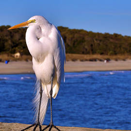 The Flexing Egret by Kaila Parmalee