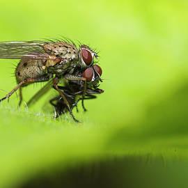 The flies killer by Mircea Costina Photography