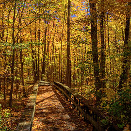 The Footbridge in the Forest by Brian Shaw