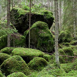 The forest of the moss by Jouko Lehto