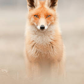 The Fox Queen by Roeselien Raimond