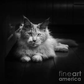 Furry Friend by Flo Photography