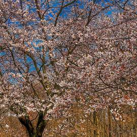 The Glory of Spring by Kathi Isserman