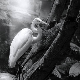 The Great White Egret by Mark Andrew Thomas