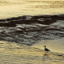The gull in low-tide land by Juergen Hess